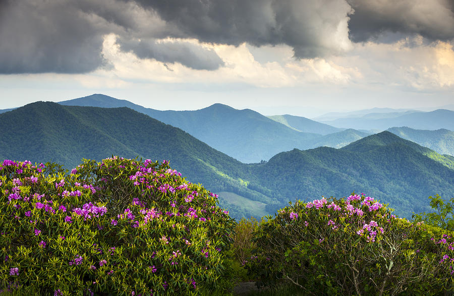 Blue Ridge Appalachian Mountain Peaks And Spring Rhododendron Flowers Photograph  - Blue Ridge Appalachian Mountain Peaks And Spring Rhododendron Flowers Fine Art Print