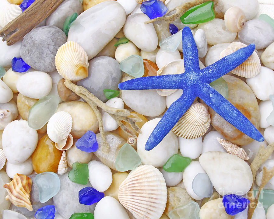Blue Starfish Photograph
