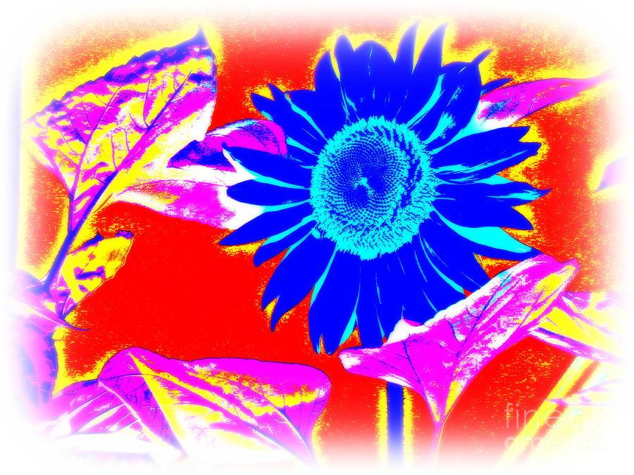 Blue Sunflower Photograph