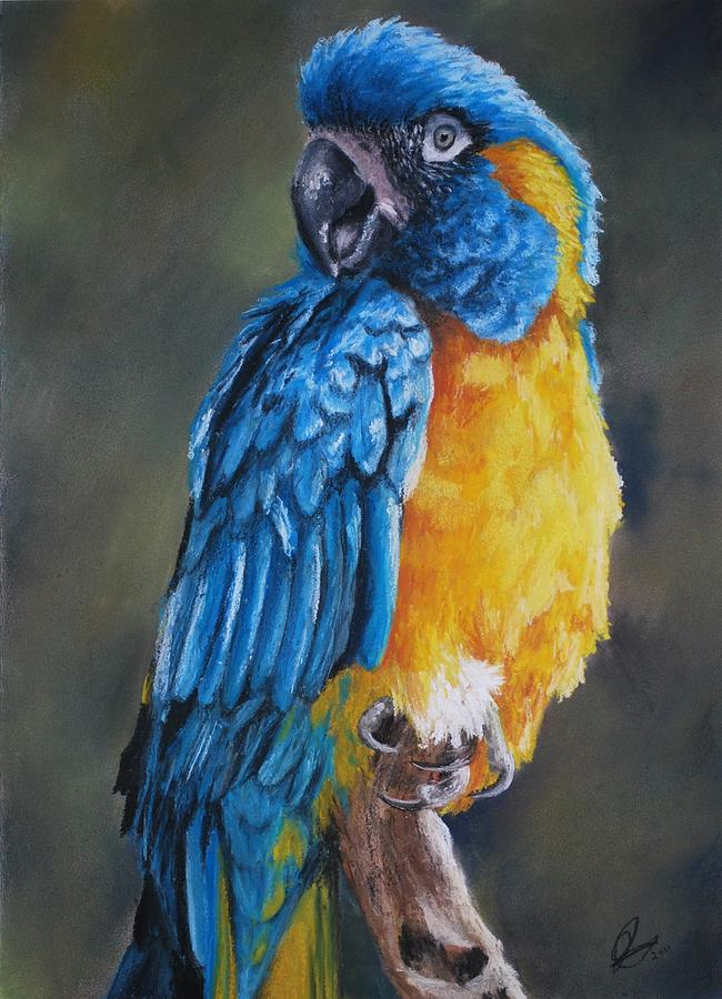 Blue Macaw Drawing Blue-throated Macaw Drawing