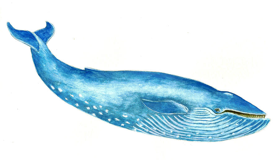 Blue Whale Painting  - Blue Whale Fine Art Print