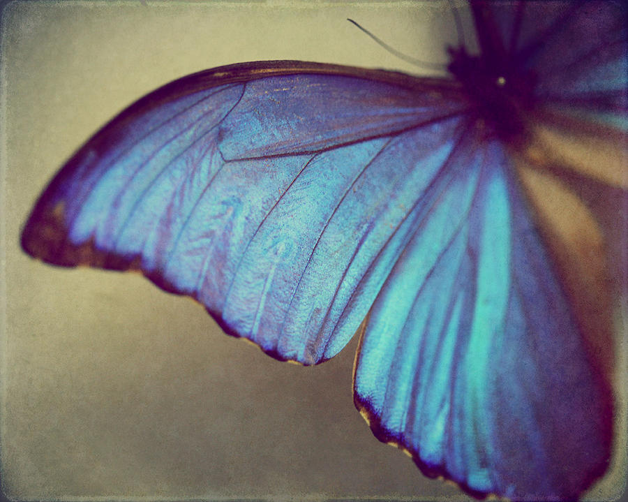 Blue Wing Photograph  - Blue Wing Fine Art Print