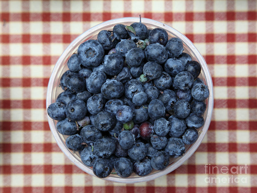 Blueberries - 5d17825 Photograph  - Blueberries - 5d17825 Fine Art Print