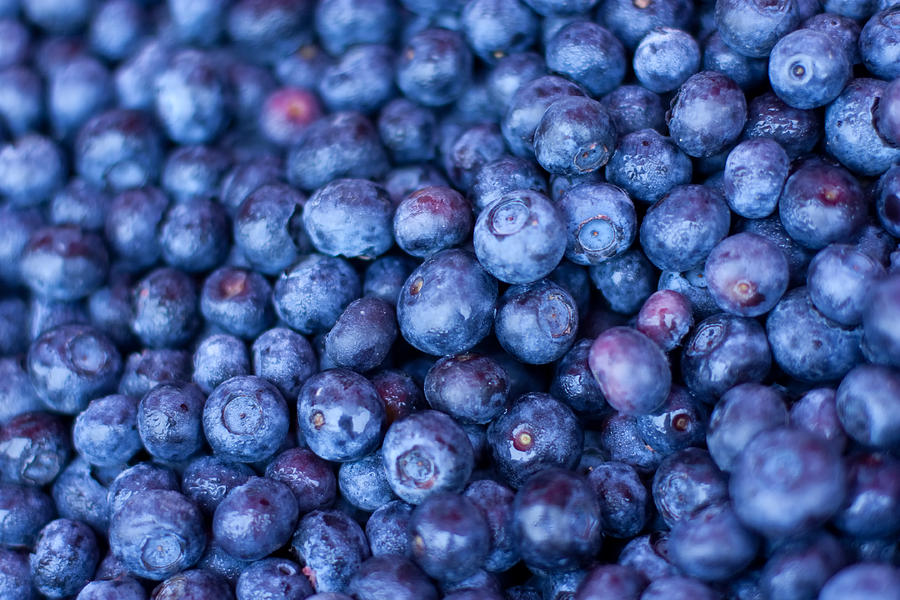 Blueberries Photograph  - Blueberries Fine Art Print