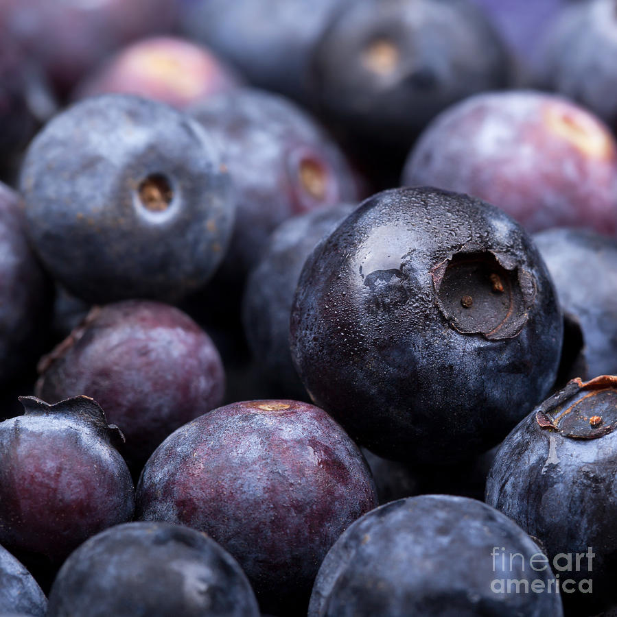 Blueberry Background Photograph  - Blueberry Background Fine Art Print
