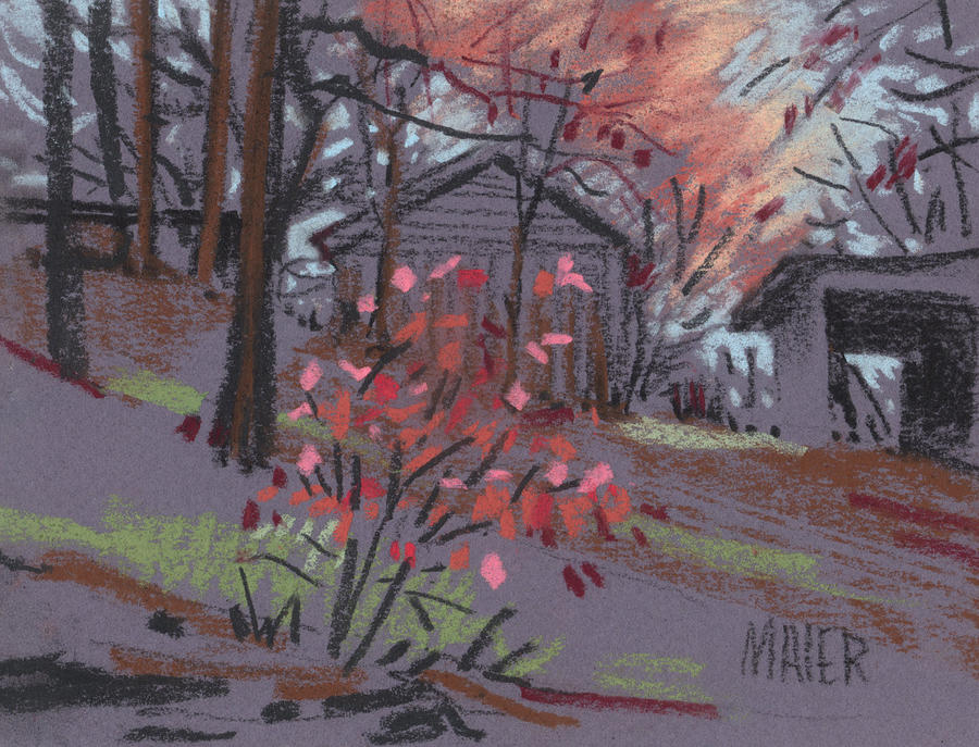 Blueberry Bush In Fall Drawing  - Blueberry Bush In Fall Fine Art Print