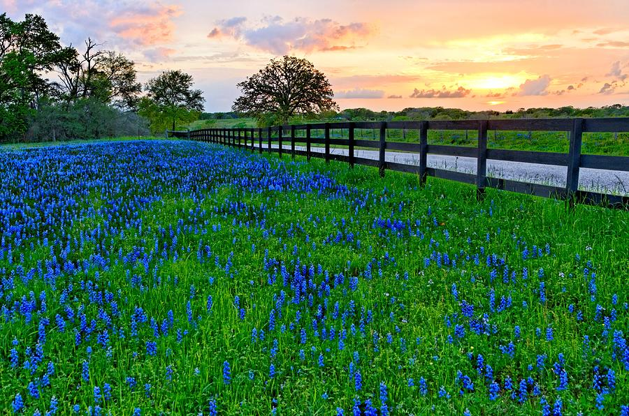 Bluebonnet Fields Forever Photograph  - Bluebonnet Fields Forever Fine Art Print