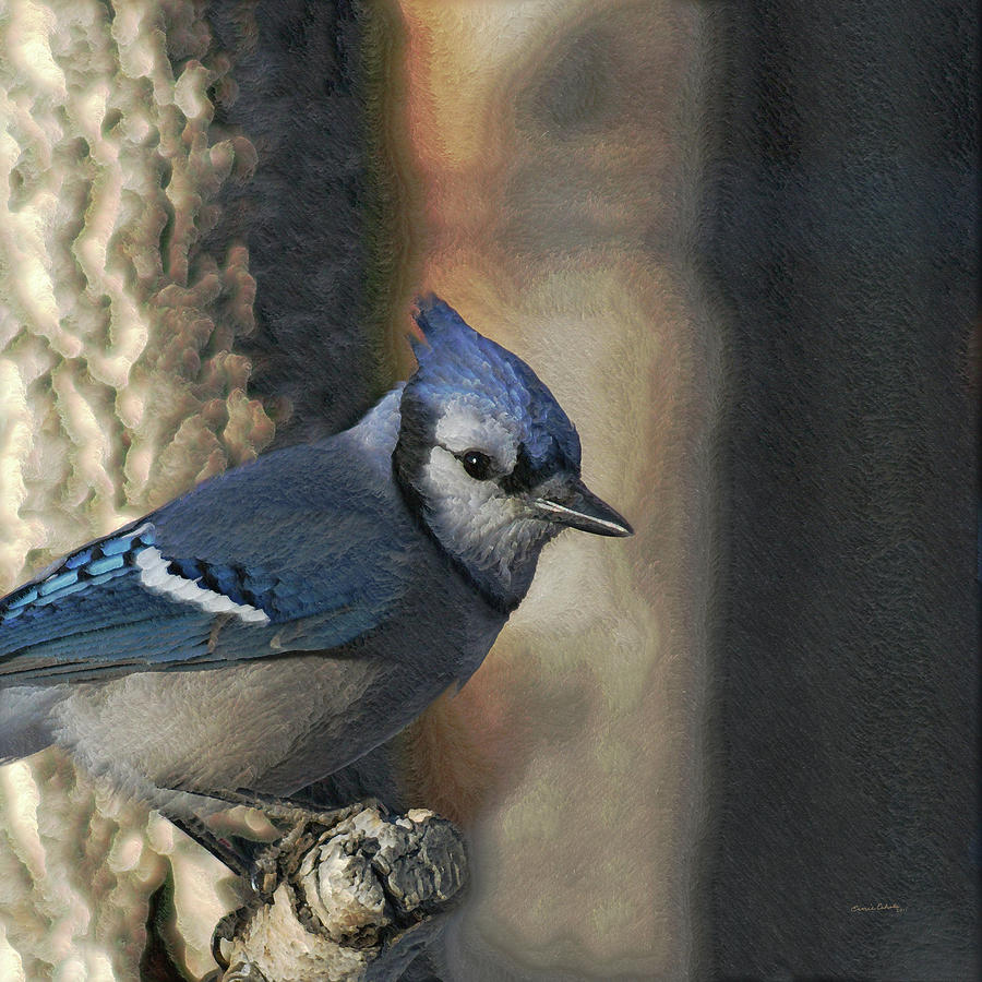 Bluejay Digitally Enhanced Photograph  - Bluejay Digitally Enhanced Fine Art Print