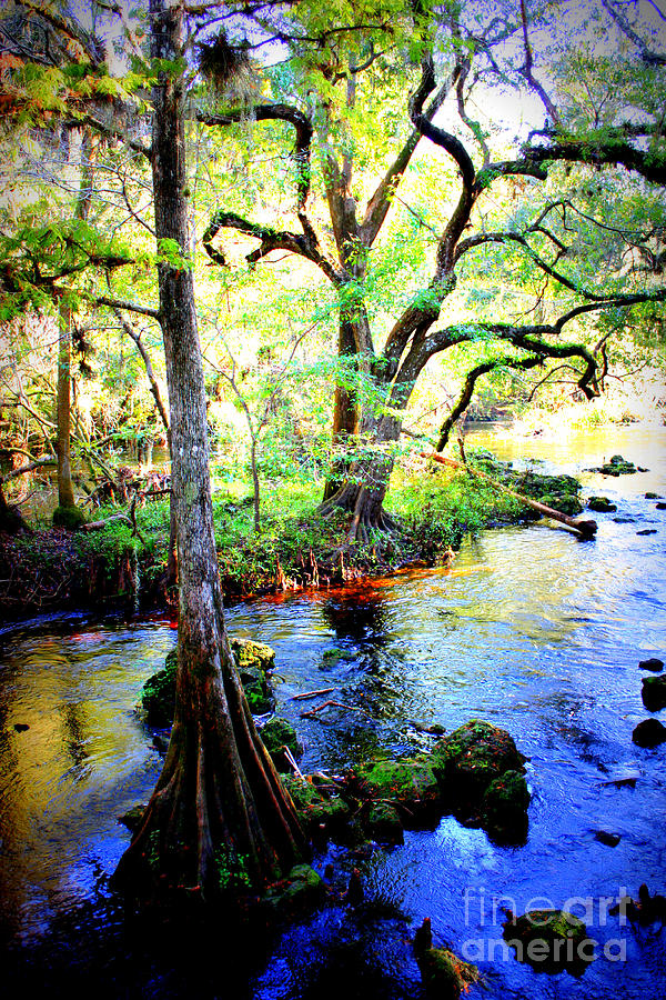 Blues In Florida Swamp Photograph  - Blues In Florida Swamp Fine Art Print