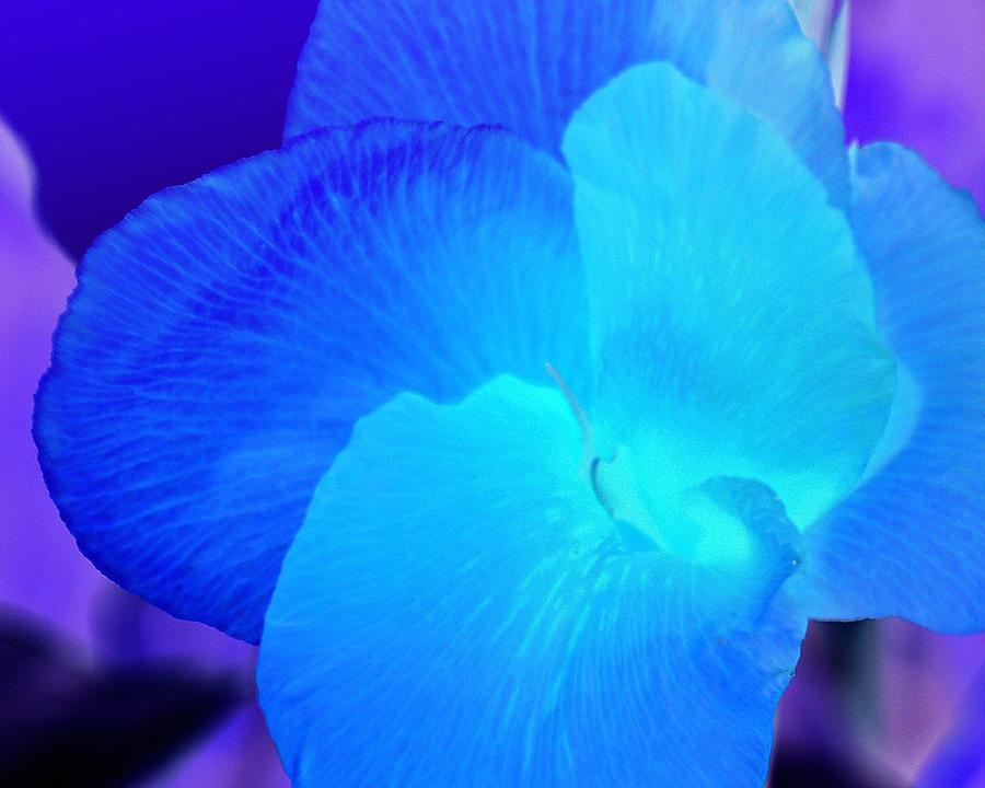 Blurple Flower Photograph