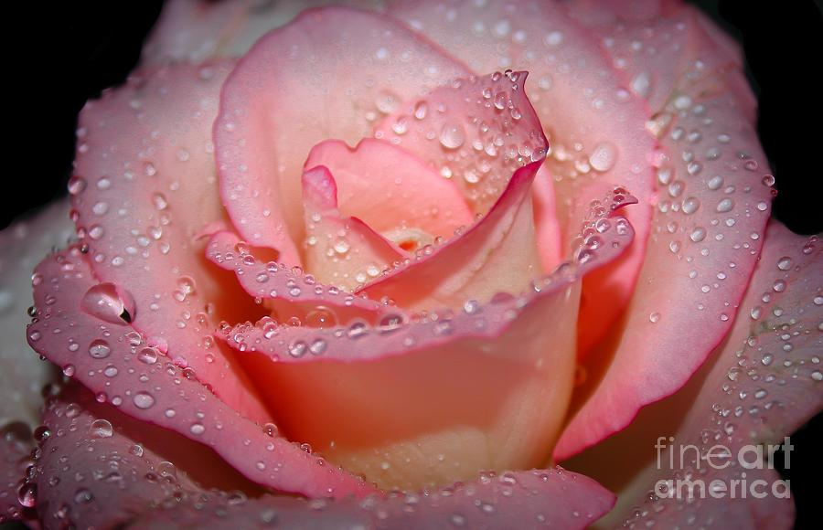 Pink Photograph - Blushing Rose by Tracy  Hall