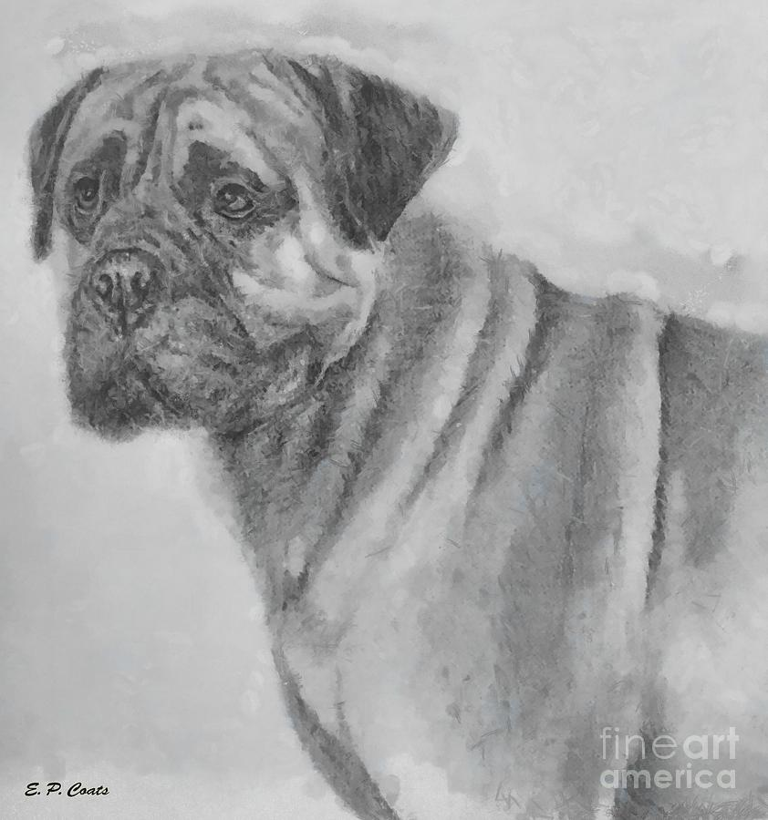 Bo The Boxer Painting  - Bo The Boxer Fine Art Print