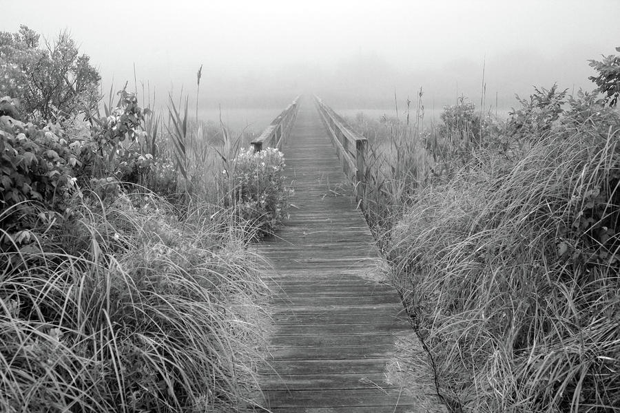Boardwalk In Quogue Wildlife Preserve Photograph