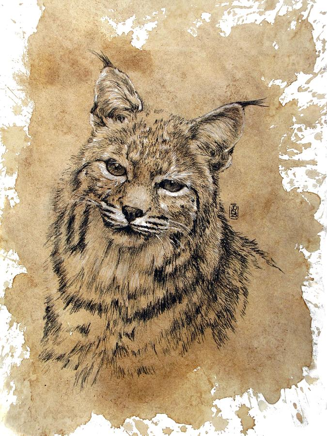 Western Wildlife Drawing - Bobcat by Debra Jones