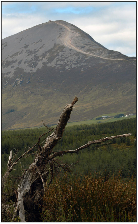 Bog Wood Photograph