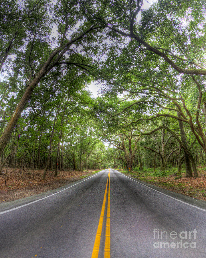 Bohicket Road Johns Island South Carolina Photograph  - Bohicket Road Johns Island South Carolina Fine Art Print