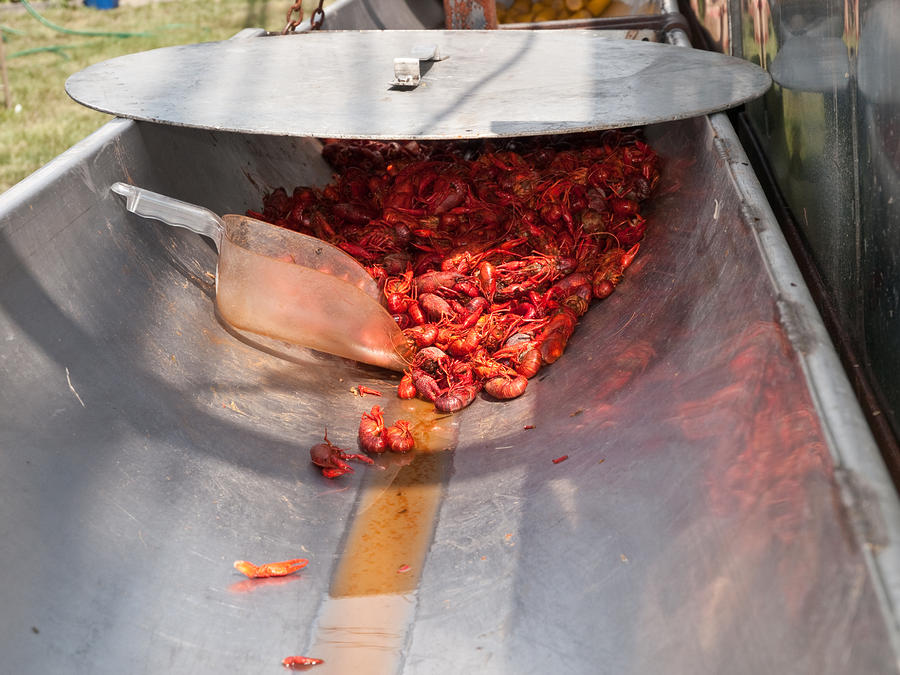 Boiled Crawfish Photograph