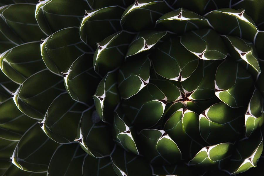 Light Photograph - Bolivian Plant In Late Afternoon Light by Robert Postma