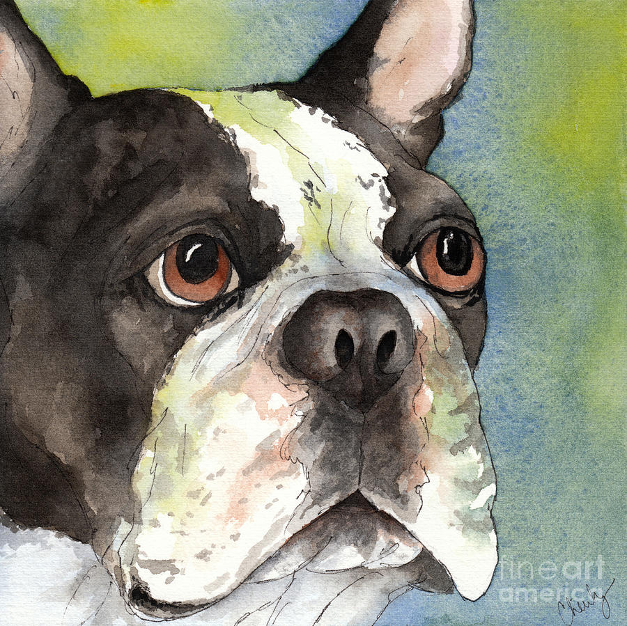 Boston Terrier Close Up Painting
