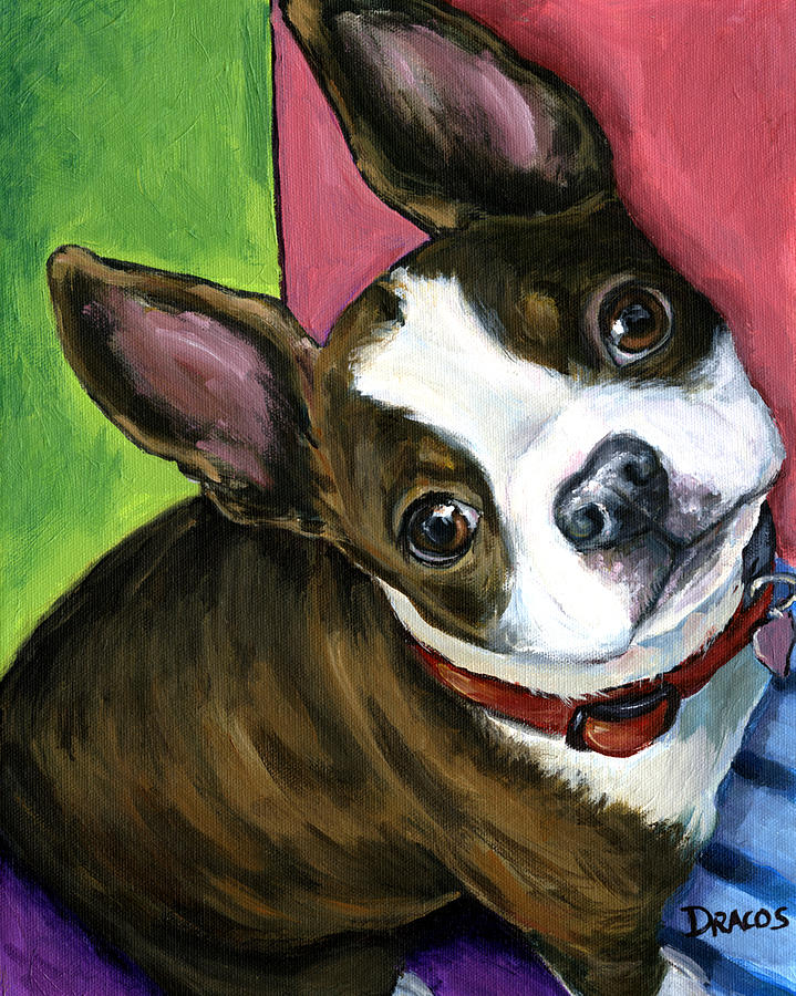 Boston Terrier Looking Up Painting  - Boston Terrier Looking Up Fine Art Print