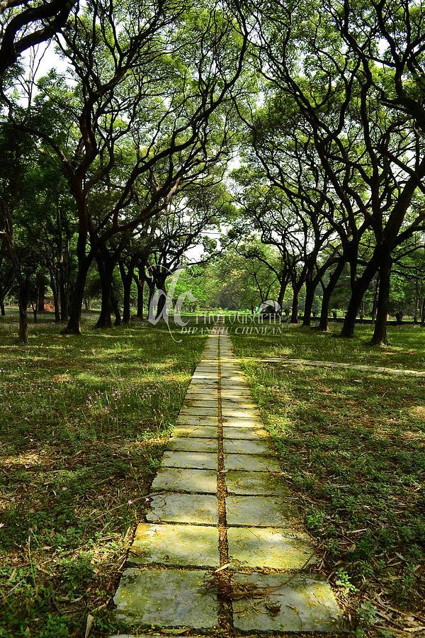 Botanical Garden Photograph