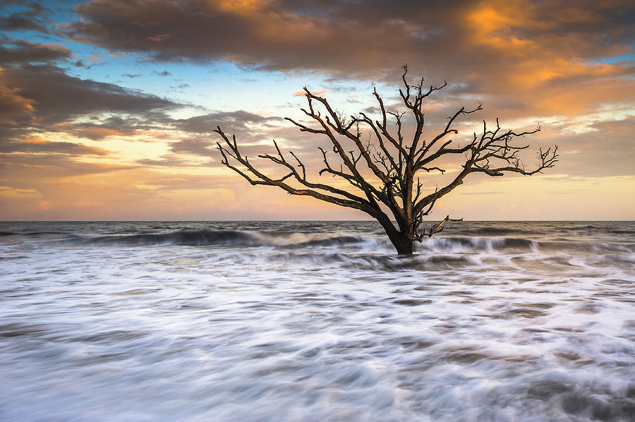Botany Bay Edisto Island Sc Boneyard Beach Sunset Photograph  - Botany Bay Edisto Island Sc Boneyard Beach Sunset Fine Art Print