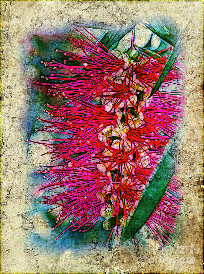 Bottlebrush Photograph  - Bottlebrush Fine Art Print