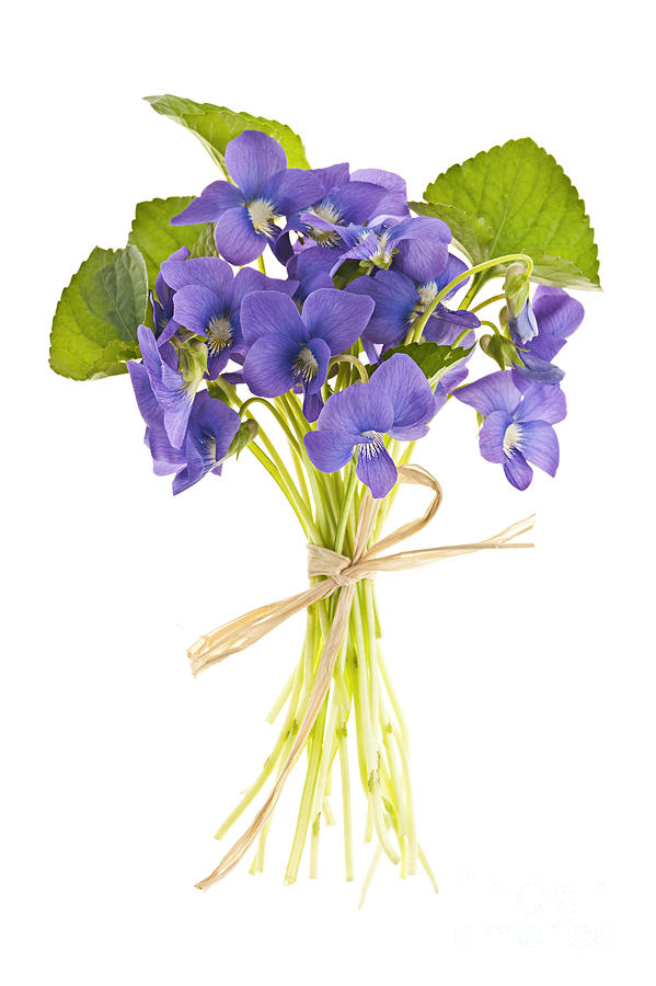 Bouquet Of Violets Photograph  - Bouquet Of Violets Fine Art Print