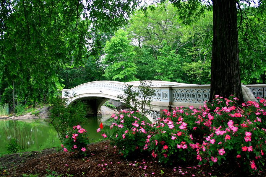 Bow Bridge In Springtime Photograph