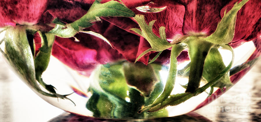 Background Photograph - Bowl Of Roses by Stelios Kleanthous