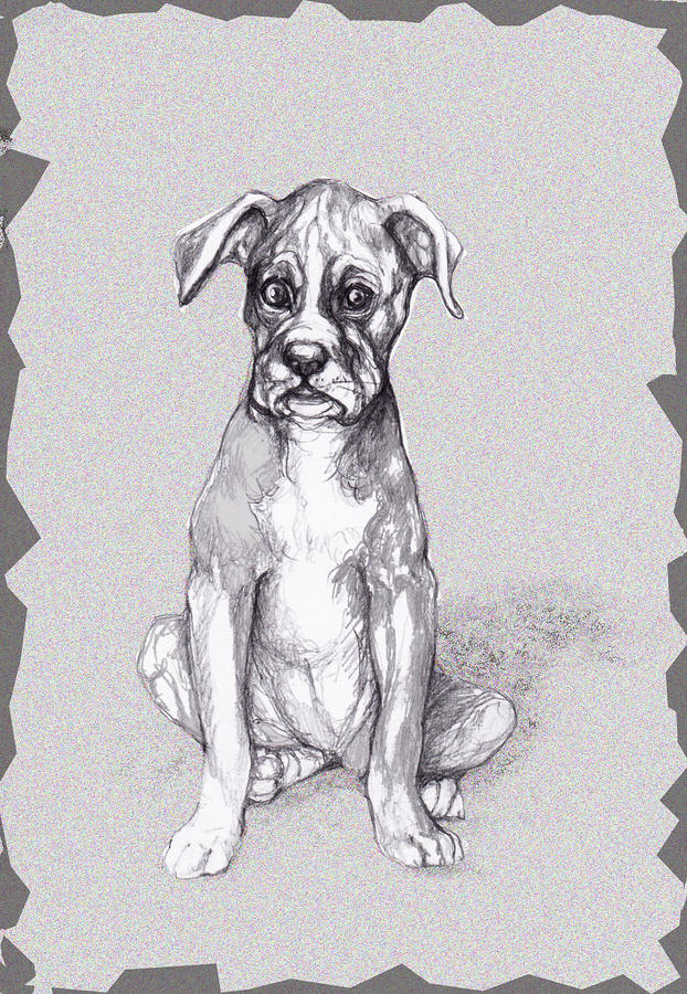 Boxer Pup Mixed Media