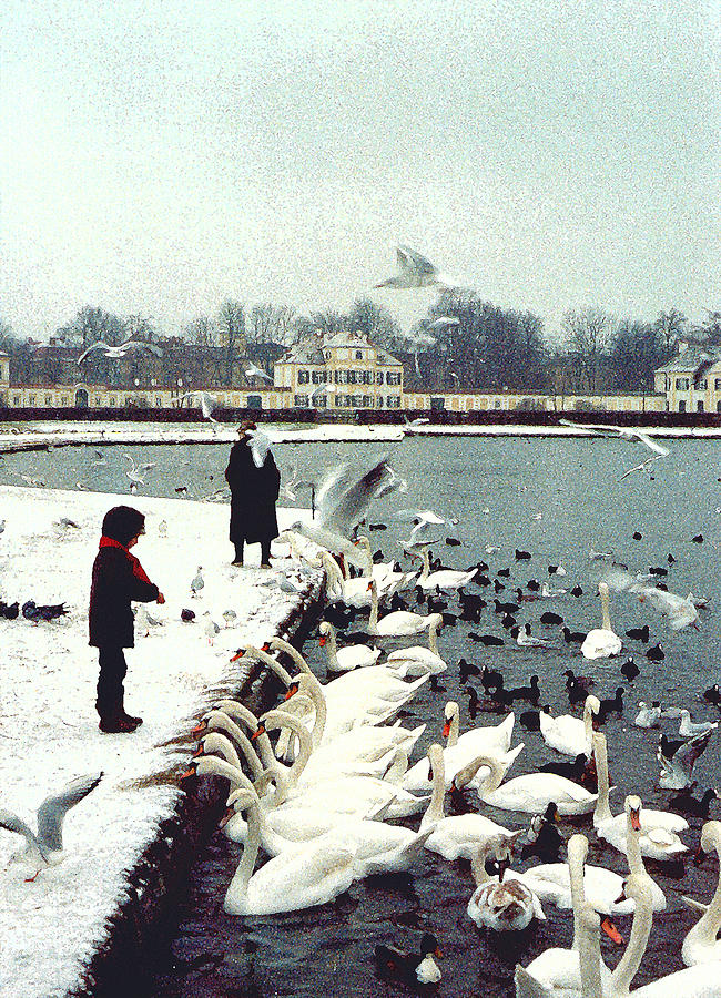 Boy Feeding Swans- Germany Photograph  - Boy Feeding Swans- Germany Fine Art Print