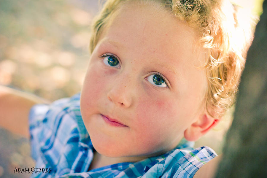 Boy Photograph - Boy In Tree by Adam Gerdes