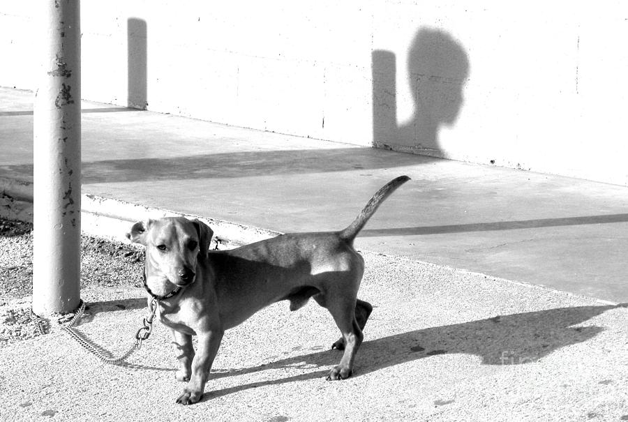 Dog Photograph - Boy Meets Dog by Joe Jake Pratt