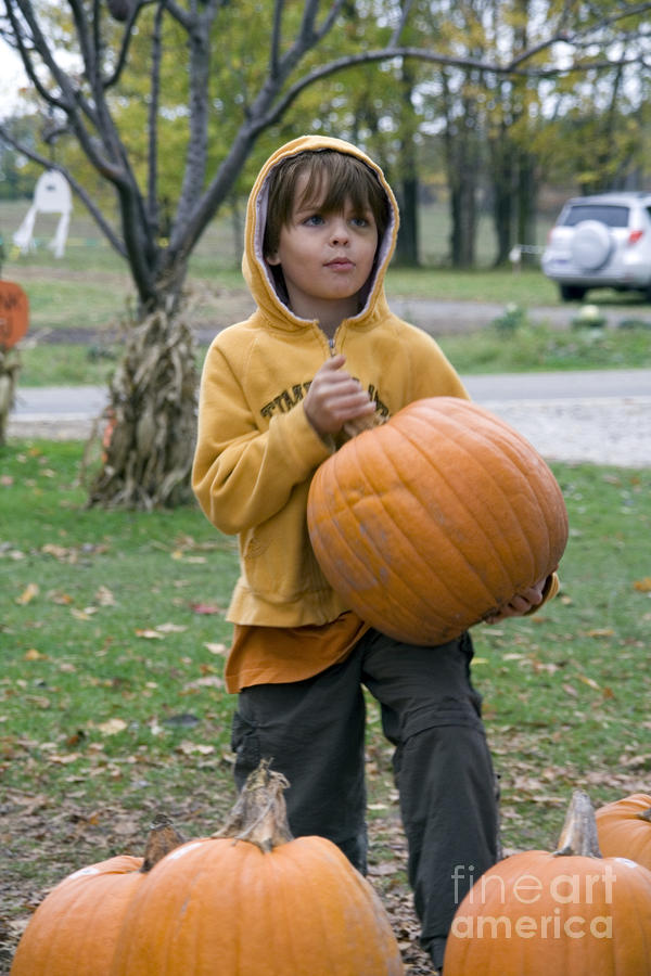 Boy Picking Up Pumpkin Photograph