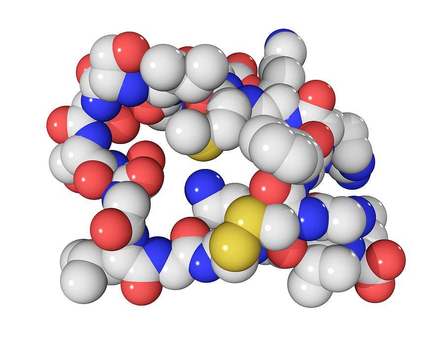 Brain Natriuretic Peptide Molecule Photograph by Laguna Design