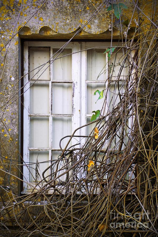 Branchy Window Photograph