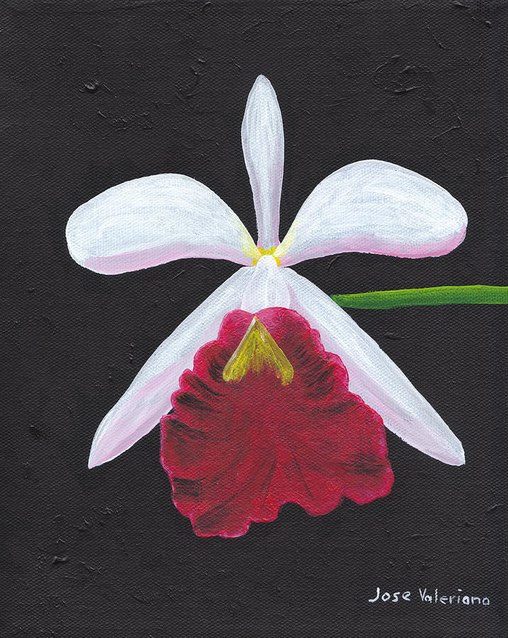 Brassalove Nodosa-rosita Painting