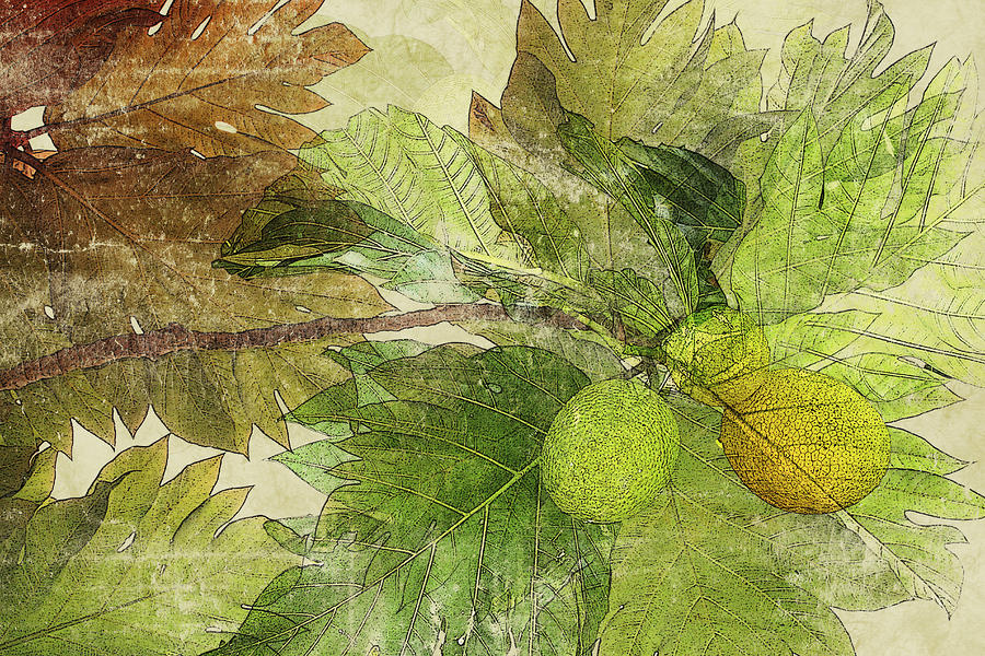 Breadfruit Mixed Media  - Breadfruit Fine Art Print