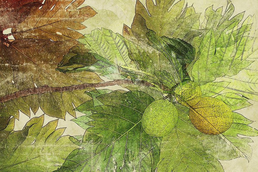 Breadfruit Mixed Media