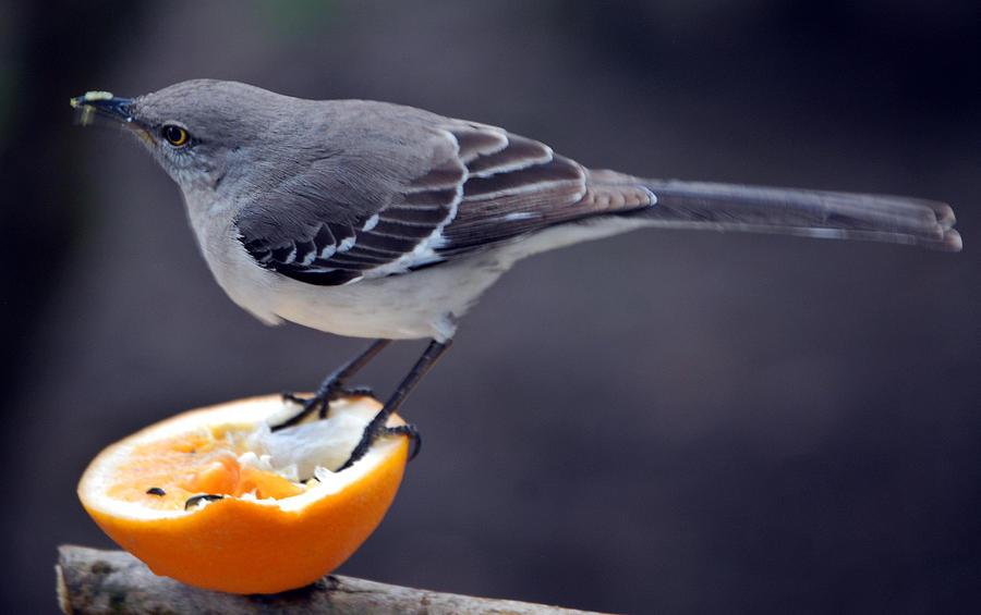 Orange Photograph - Breakfast by Skip Willits