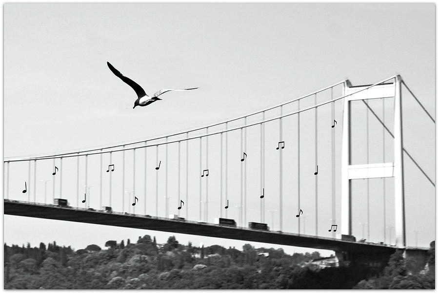 Bridge And Seagull, Bosphorus, Istanbul, Turkey Photograph