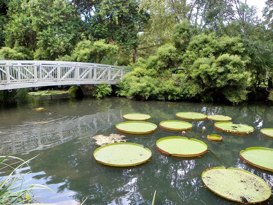 Bridge over koi pond by sheri mcleroy for Koi pond bridge