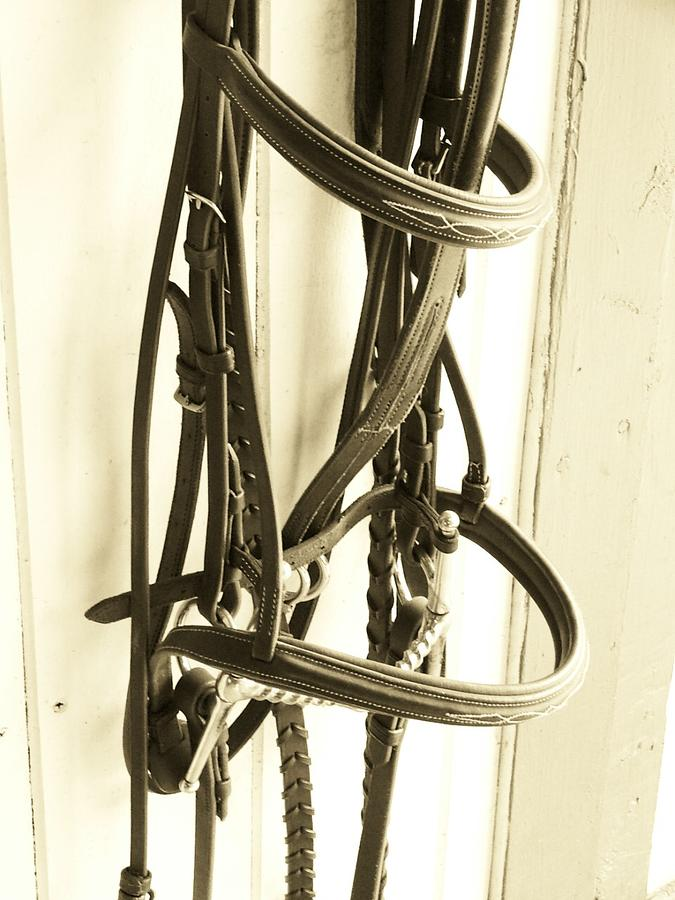 Bridle Photograph