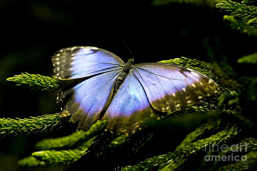 Bright Blue  Photograph