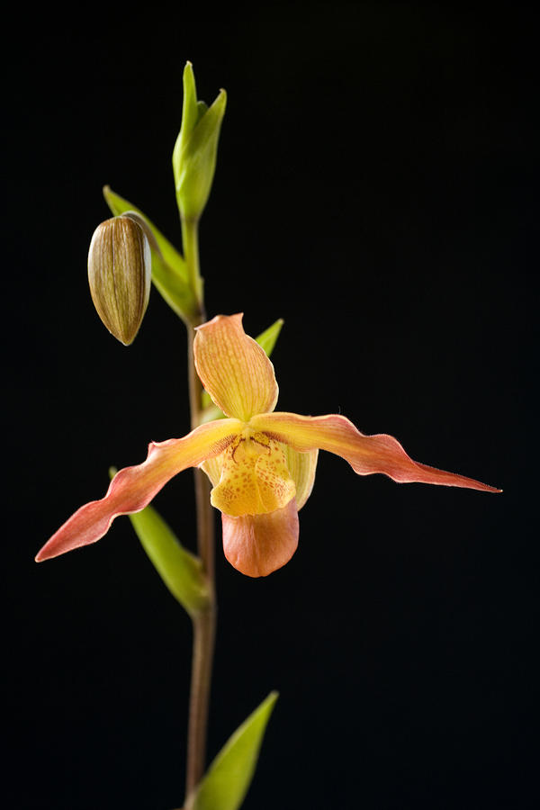 Bright Orchid Photograph