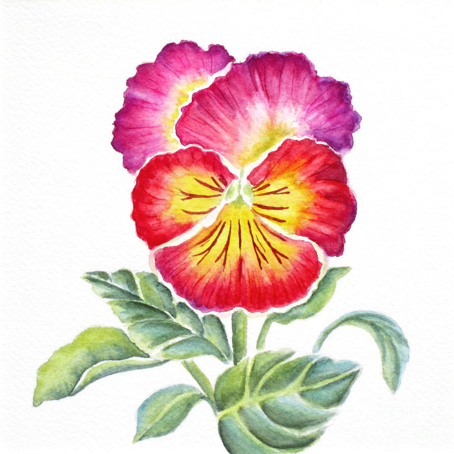 pansy flower drawing - photo #33