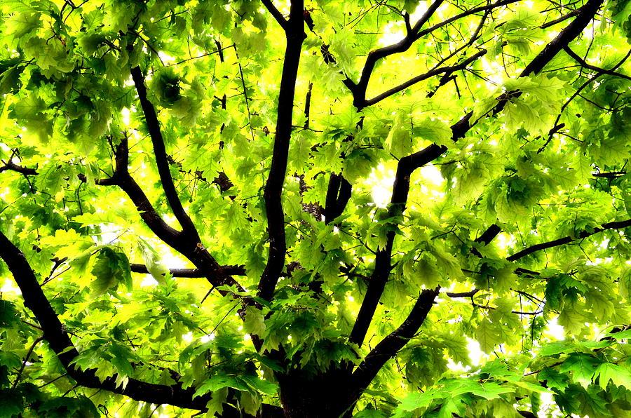 bright tree - 28 images - bright tree 047 365 16 02 2011 ...