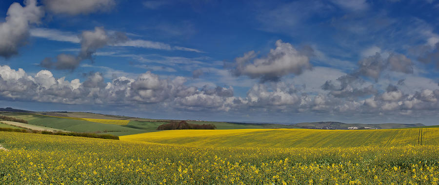 Brighton Yellow Fields Photograph