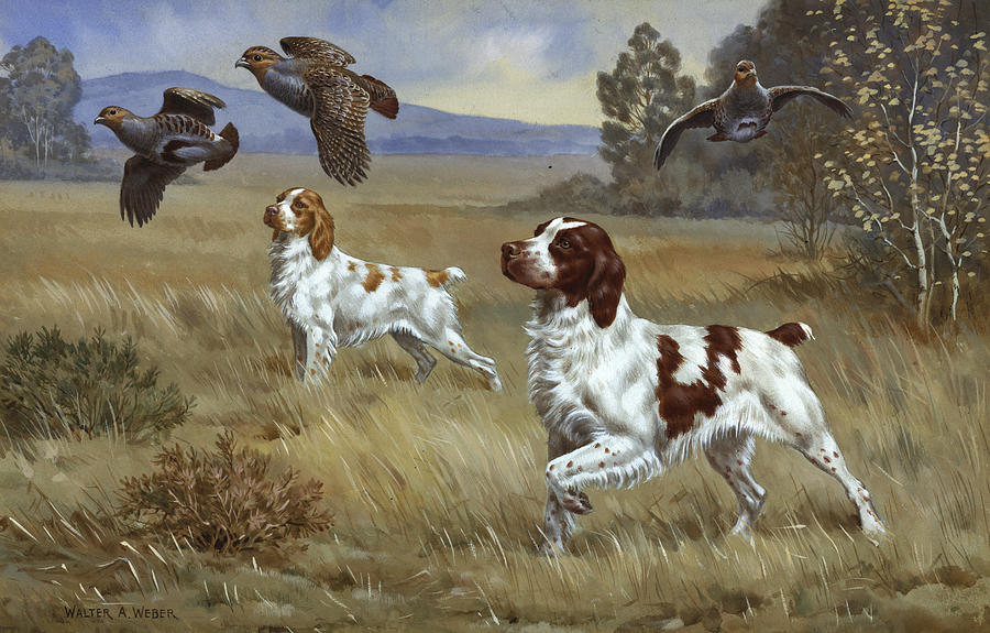 Brittany Spaniels Flush Three Birds Photograph
